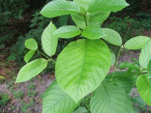 buy kratom discount coupon