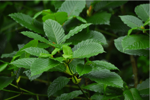 how to use kratom for gardening at home