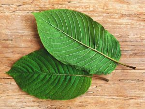 red vein borneo kratom for sale