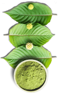 grow kratom leaf
