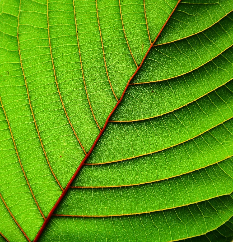 what is kratom used for online
